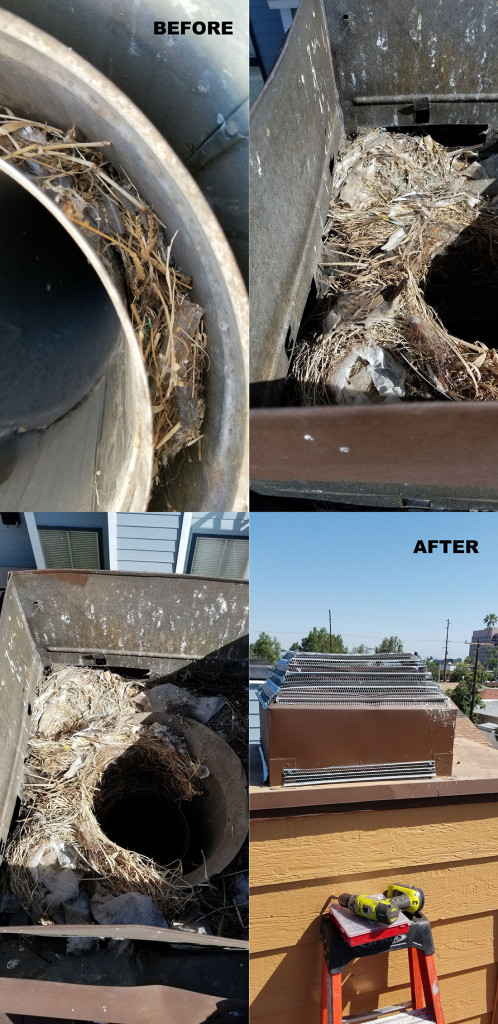 birds nesting in a chimney